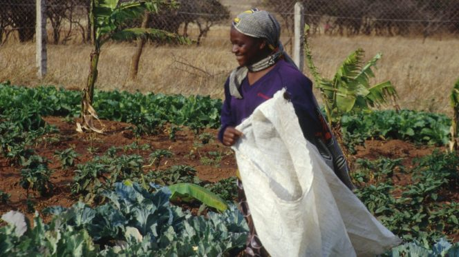 Africa, donna, agricoltura