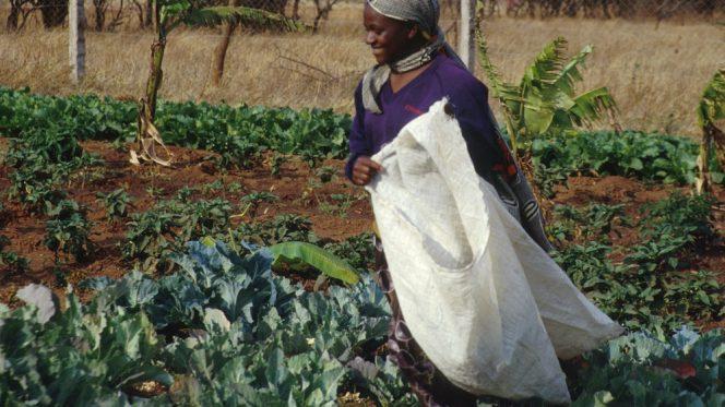 Donna agricoltura Tanzania